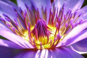 flower-2919284_640